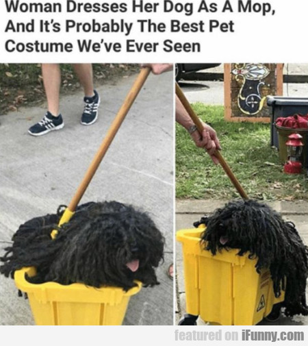 Woman Dresses Her Dog As A Mop And It's...