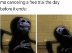 Me Canceling A Free Trial The Day Before It...