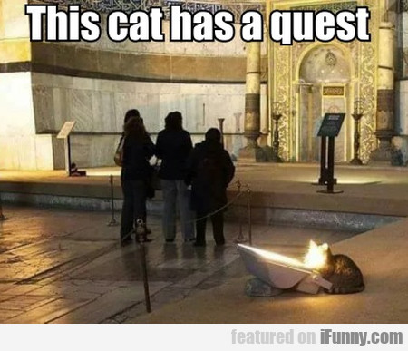 This Cat Has A Quest