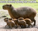 Just A Family Going For A Walk