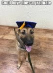 Good Boye Does A Graduate