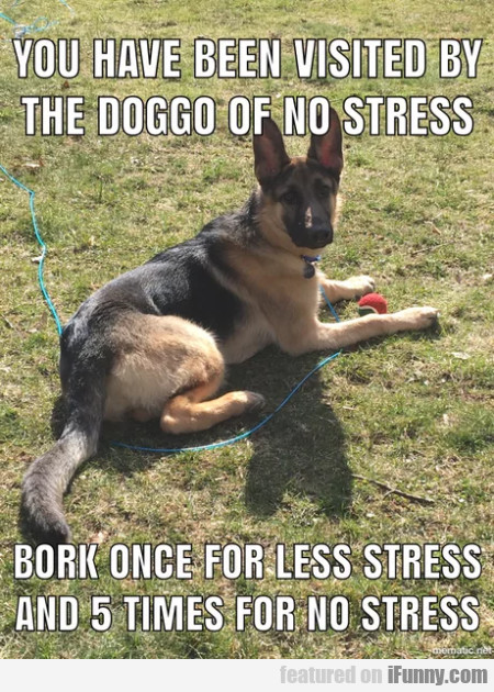 You Have Been Visited By The Doggo Of No Stress