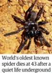 World's Oldest Known Spider Dies At 43 After...
