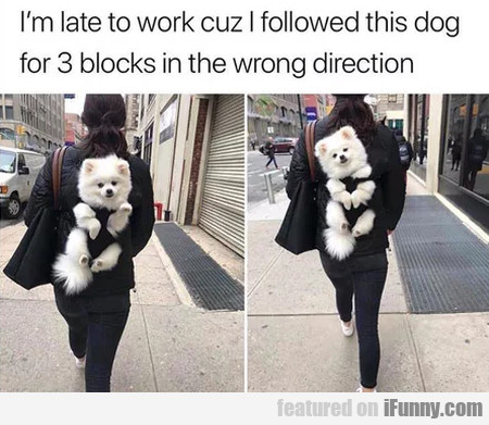 I'm late to work cuz I followed this dog for 3...