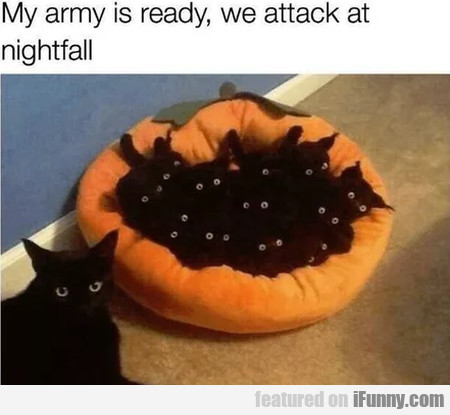 My Army Is Ready, We Attack At Nightfall...