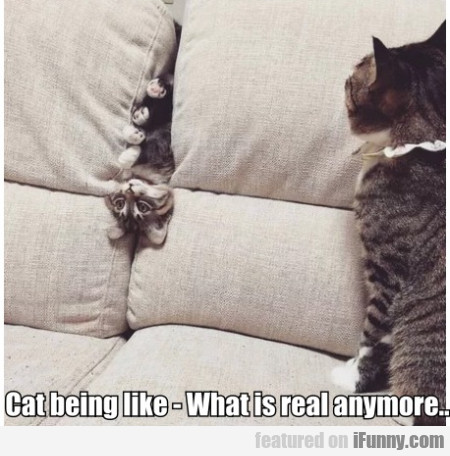 Cat being like - What is real anymore?
