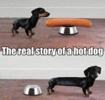 The Real Story Of A Hot Dog