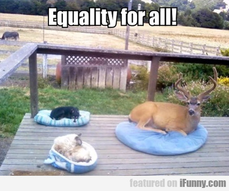 Equality For All!