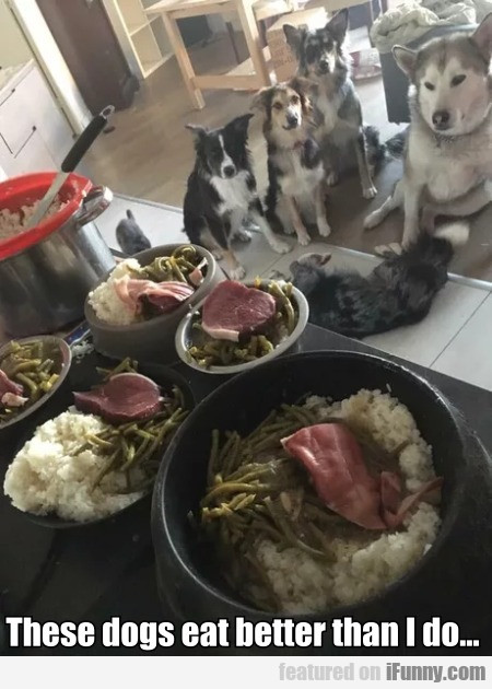 These Dogs Eat Better Than I Do