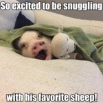 So Excited To Be Snuggling With His Favorite Sheep