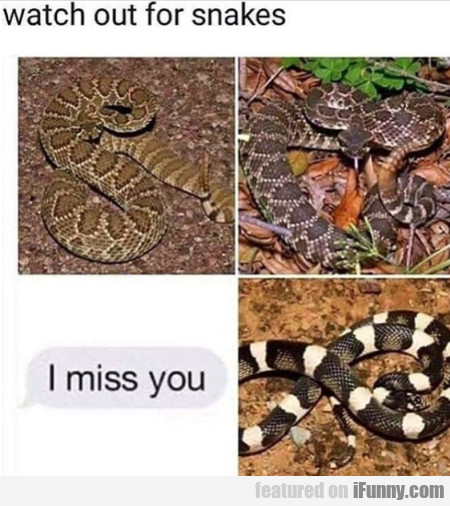 Watch Out For Snakes - I Miss You...