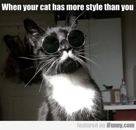 When your cat has more style than you
