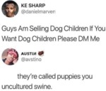 Guy Am Selling Dog Children If You Want Dog...