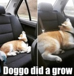 Doggo Did A Grow