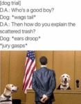 Dog Trial - Who's A Good Boy?