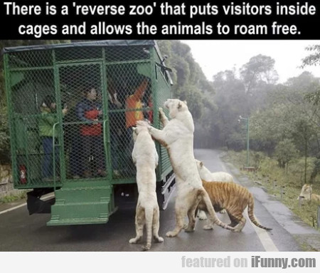 There is a reverse zoo that puts visitors inside..
