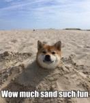 Wow Much Sand Such Fun...