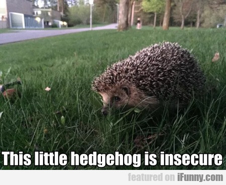 This Little Hedgehog Is Insecure...