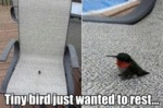 Tiny Bird Just Wanted To Rest