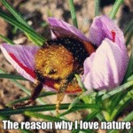 The Reason Why I Love Nature