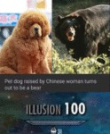 Pet Dog Raised By Chinese Woman Turns Out To...