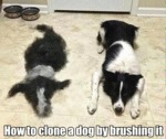 How To Clone A Dog By Brushing It