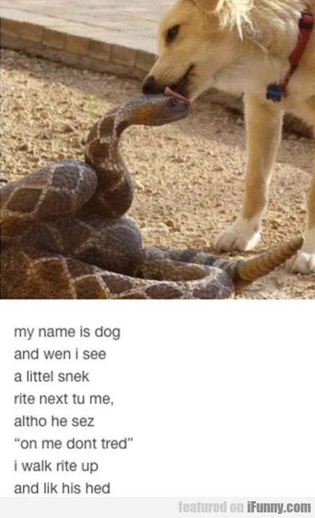 My Name Is Dog And Wen I See A Littel Snek...