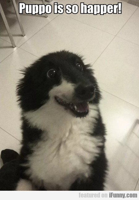 Puppo is so happer!