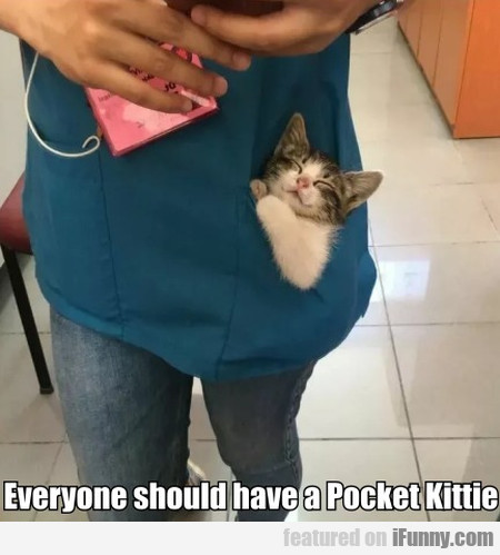 Everyone Should Have A Pocket Kittie