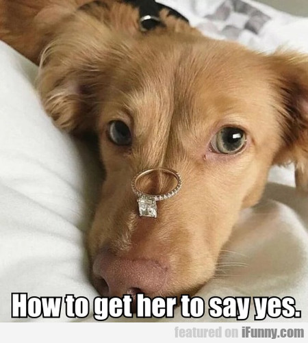 How To Get Her To Say Yes