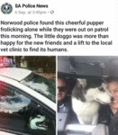 Norwood Police Found This Cheerful Pupper
