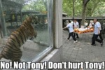 No! Not Tony! Don't Hurt Tony!