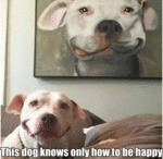 This Dog Knows Only How To Be Happy
