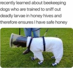 Recently Learned About Beekeeping Dogs Who...
