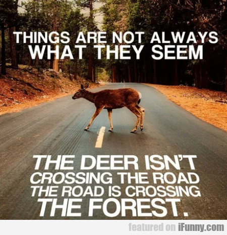 Things Are Not Always What They Seem - The Deer...