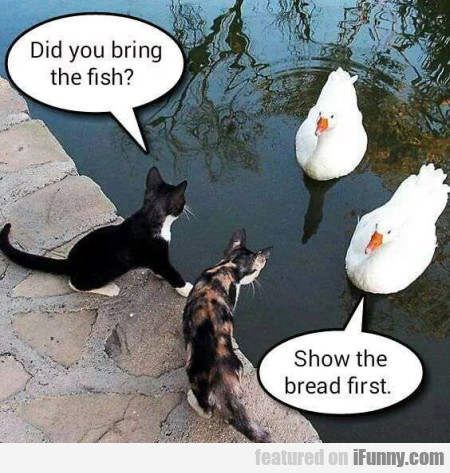 Did You Bring The Fish? - Show The Bread First
