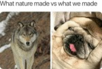 What Nature Made Vs What We Made...