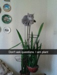 Don't Ask Questions. I Am Plant.
