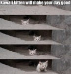 Kawaii Kitten Will Make Your Day Good
