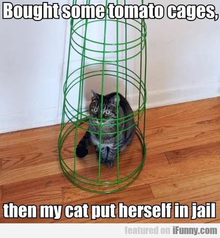 Bought Some Tomato Cages, Then My Cat Put...