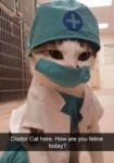 Doctor Cat Here. How Are You Feline Today?