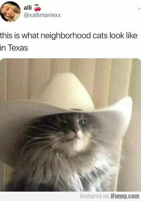 This Is What Neighborhood Cats Look Like...