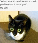 When A Cat Closes Its Eyes Around You It Means...