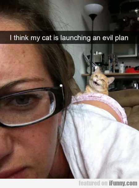 I Think My Cat Is Launching An Evil Plan