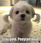 Stay Gold, Ponytail Boye