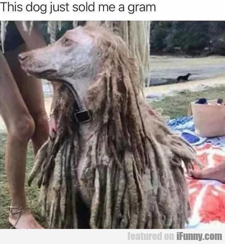 This dog just sold me a gram