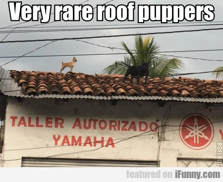 Very Rare Roof Puppers