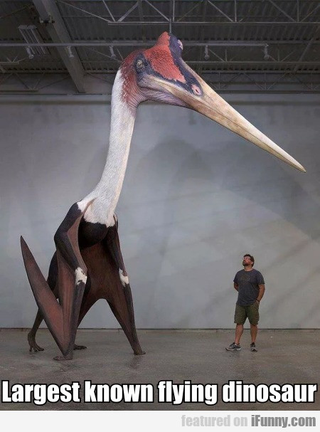 Largest Known Flying Dinosaur