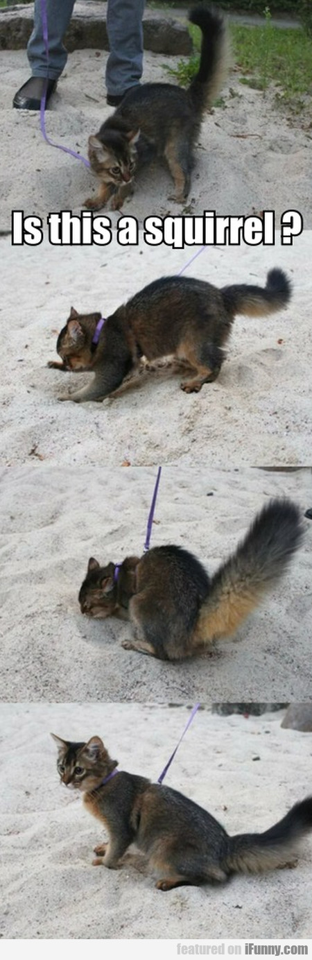 Is This A Squirrel ?