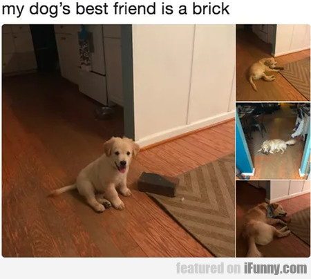 My Dog's Best Friend Is A Brick...
